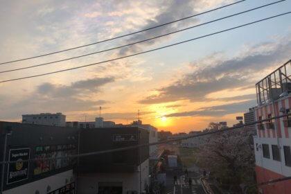 桜上水 桜と夕陽